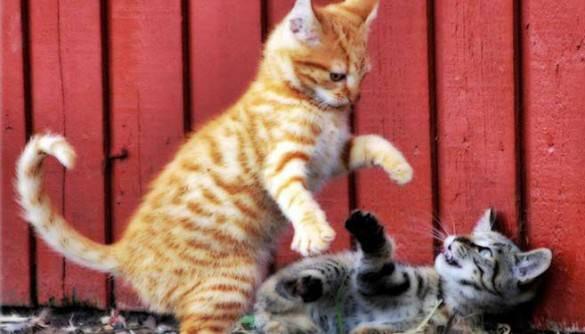 Alles f r die katz oder den hund welche tapeten eignen for Welche poolfolie 0 6 oder 0 8