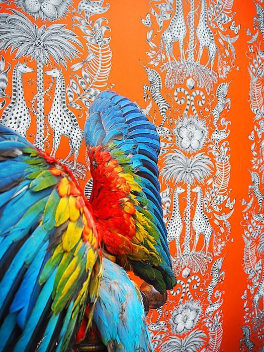 Papier peint Marsali Mat Feuilles Fleurs Girafes Palmiers Zèbre Orange Gris Blanc gris Gris noir