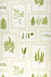 Wallpaper Sitka fern green