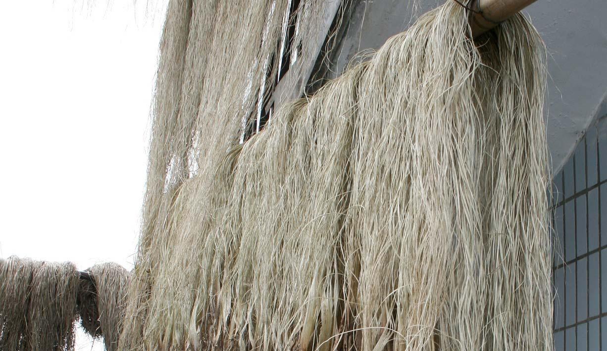 Grasscloth-Fasern-trocknen