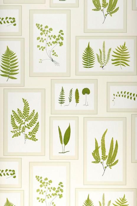 Papel de parede Sitka Mate Molduras Folhas Branco creme Bege esverdeado pálido Verde samambaia Verde amarelado Preto