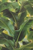 Wallpaper Vale Matt Banana leaves Green Green yellow Black brown