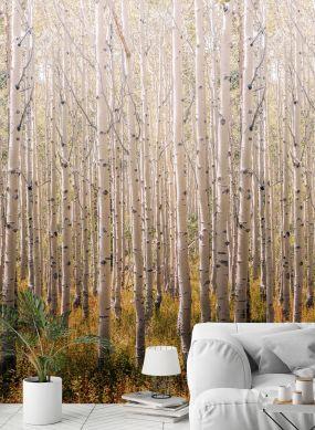 Photo murale Forest tons de gris Vue pièce