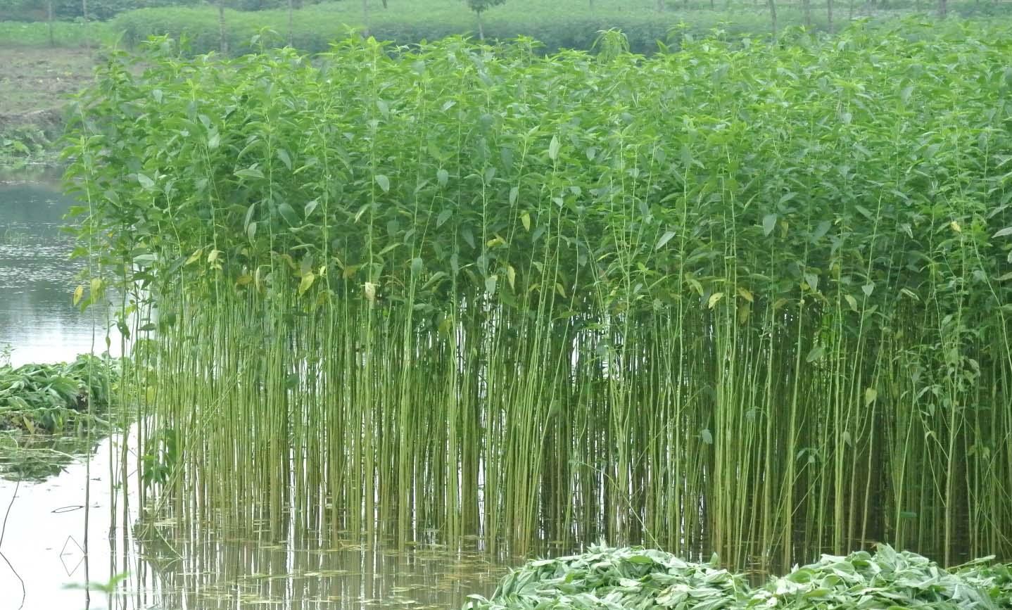 Grasscloth-Papier-Peint-Jute