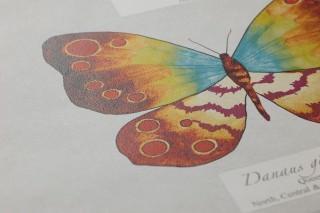 Carta da parati Farfalla Opaco Farfalle Bianco crema Viola erica Verde giallastro Bianco grigiastro Blu turchese