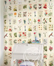 Wallpaper Temet Matt Flowers Plants Butterflies Birds Cream Light ivory Blue Brown Yellow Green Red