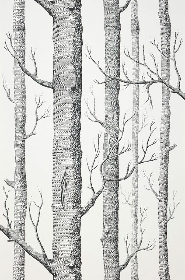 138101-A_Birch-Forest58693d464d62c