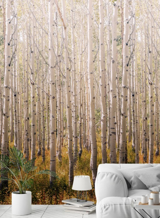 Wallpaper Forest Matt Trees Birken Beige Grey brown Grey tones Ochre  Orange red White