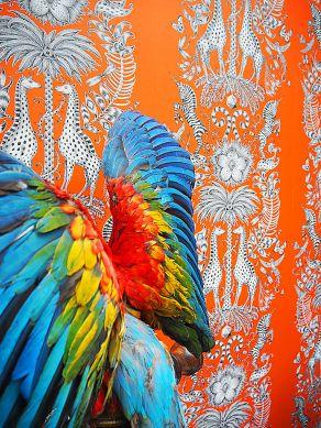 Papel de parede Kruger laranja Ver quarto