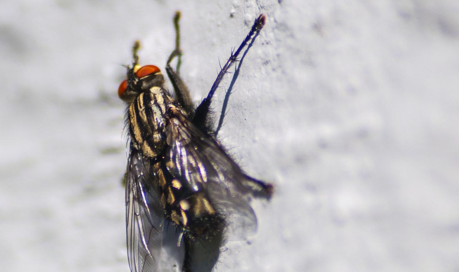 Fliegenschiss-an-Tapete